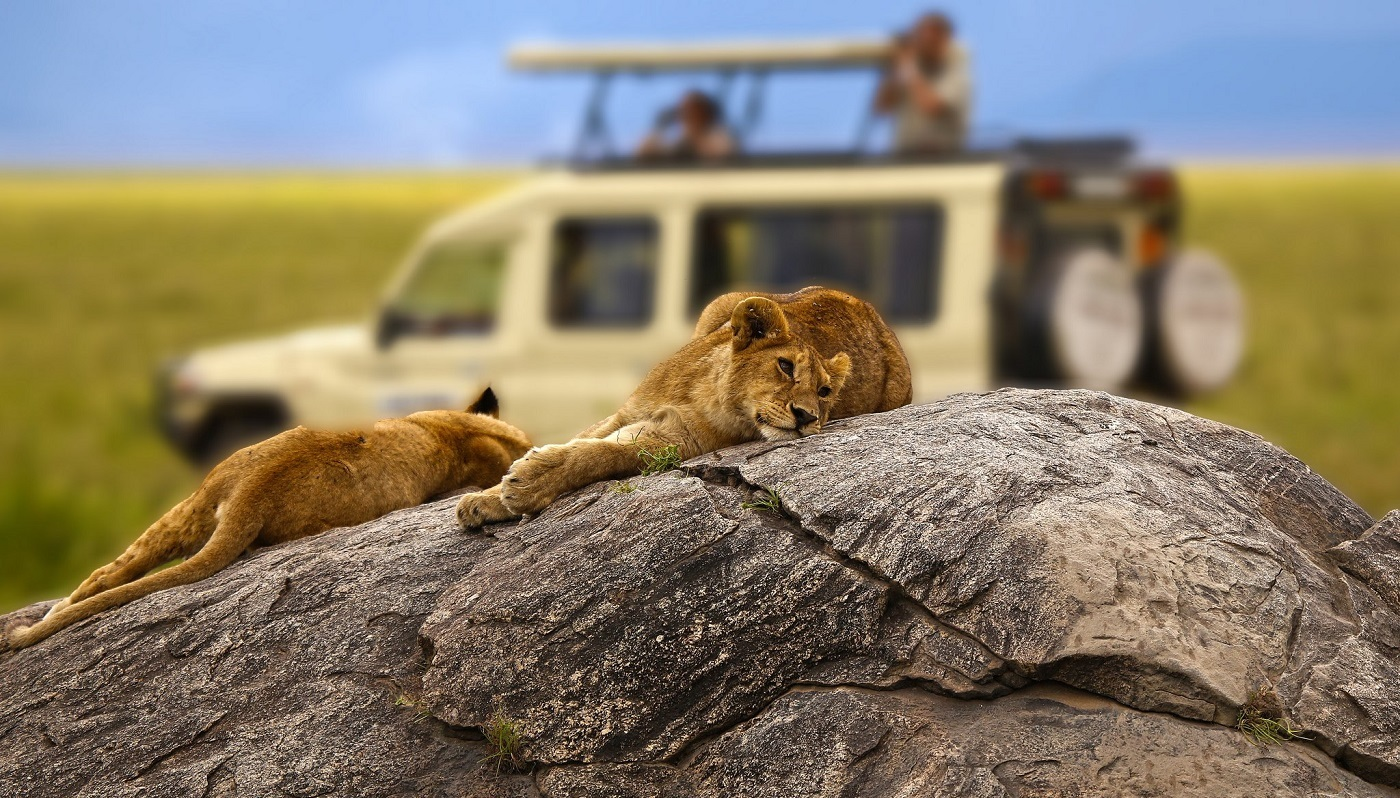 African Safari Packages, African Safaris, Africa Tailor Made Tours